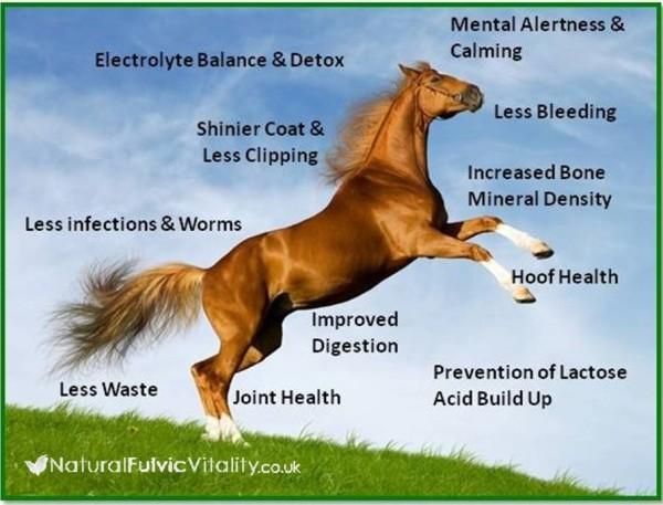 horse-fulvic1