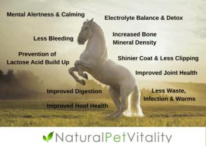 Benefits of Natural Pet Vitality